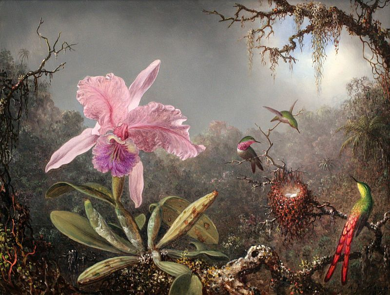Martin Johnson Heade Online: www.artcyclopedia.com/artists/heade_martin_johnson.html