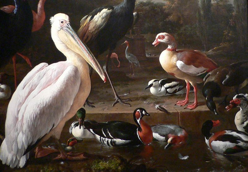 D'Hondecoeter, water birds